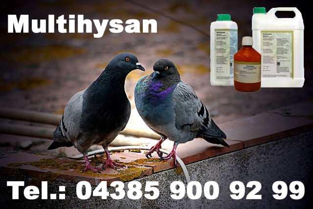Tauben Multihysan
