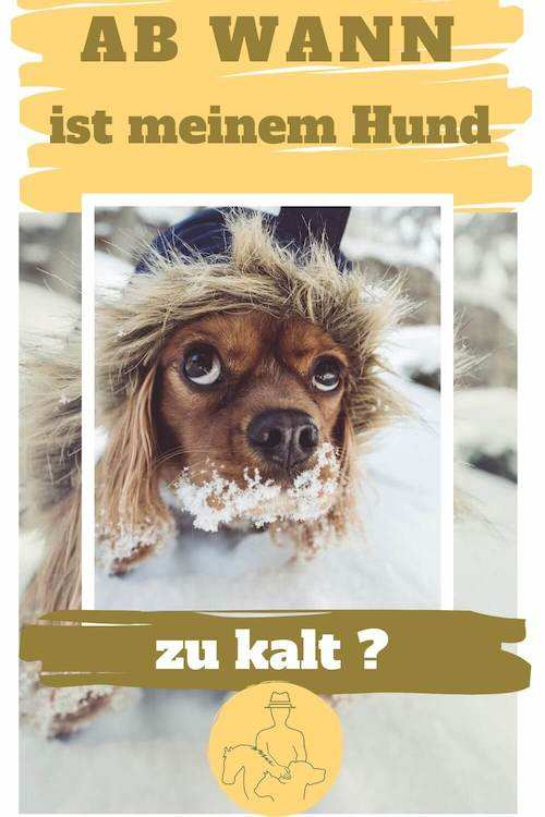 Hund frieren Temparatur