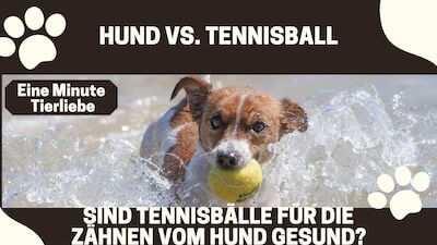Tennisball für die Zähne eines Hundes gefährlich?