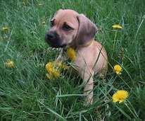 Reico-Vital Flohmittel Hund