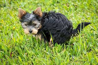 Reico Hundefutter online bestellen