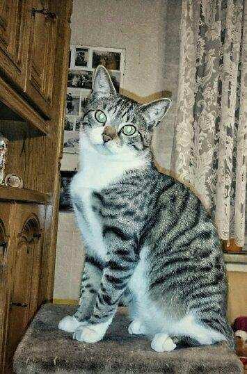 Reico Katzenfutter - Das beste Trockenfutter für Katzen